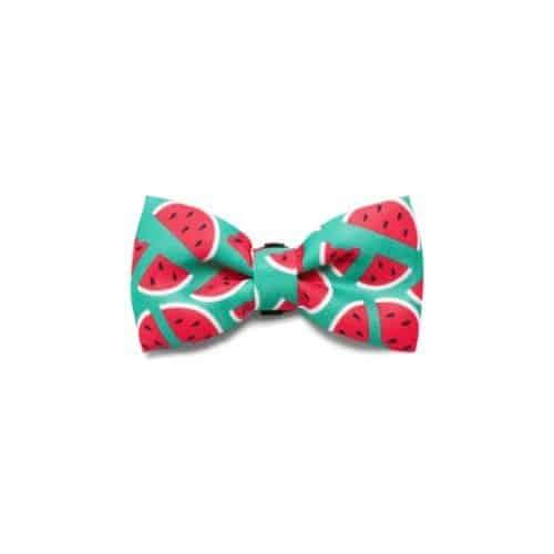 Zeedog Bow Tie - Lola